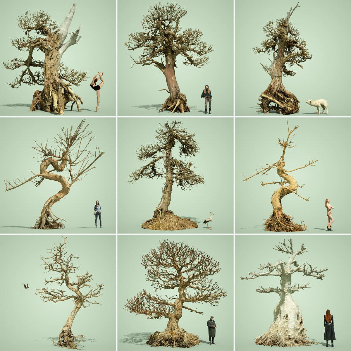 Dead Bonsai Tree Collection